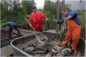 Росрыболовство перепрофилирует рыбоводные госзаводы на Дальнем Востоке с кеты на горбушу