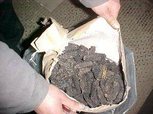 Полицейские на Сахалине перекрыли масштабный канал незаконной поставки трепанга