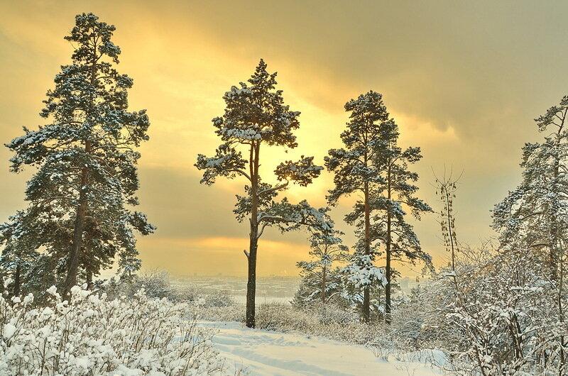 enshtein65 - Янтарная зима