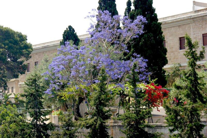 растения израиля в картинках двусложная строка главная