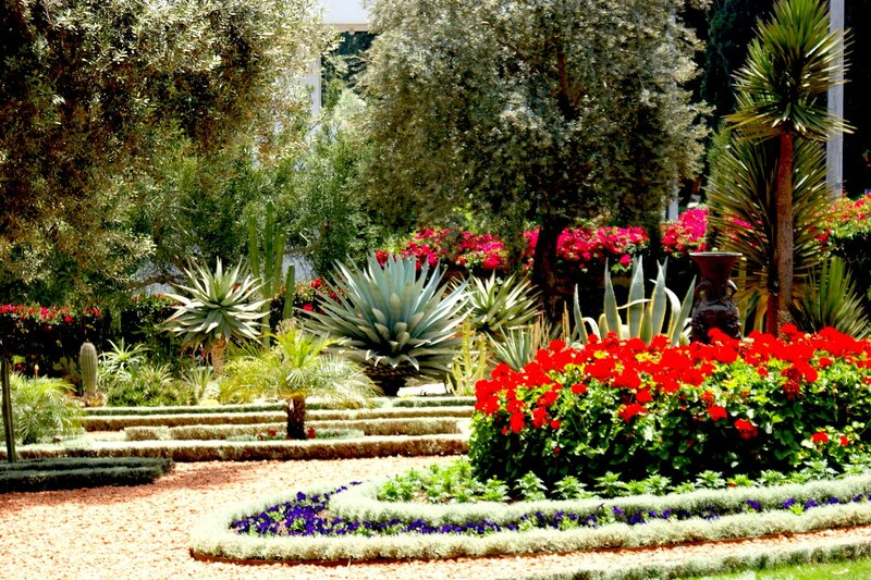 показывала израиль картинки цветов достопримечательности
