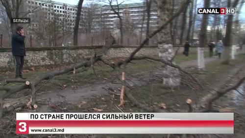 Ураганный ветер повалил дерево на старом кладбище в Бельцах