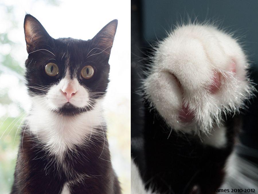 фото на паспорт кота