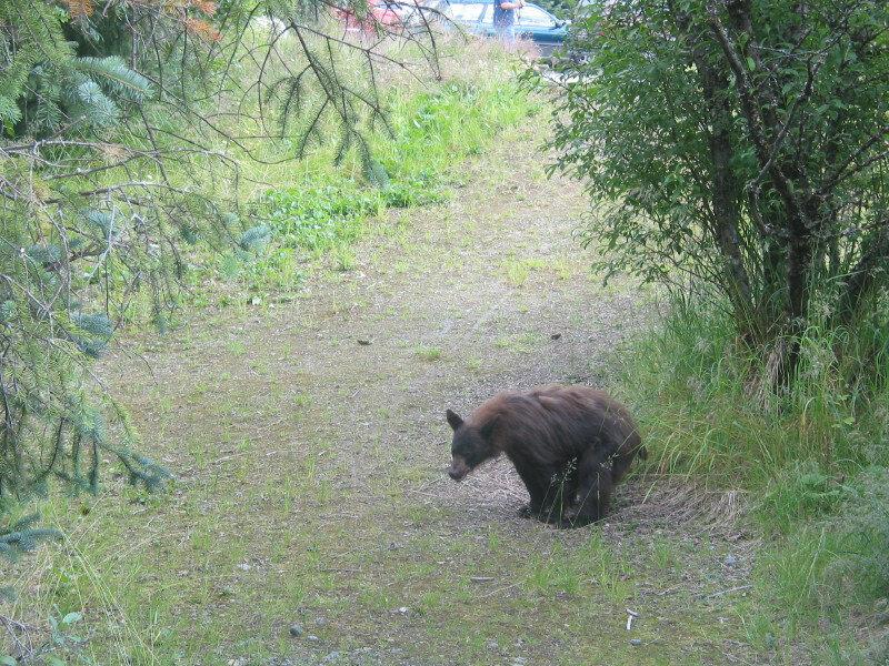 медведь какает