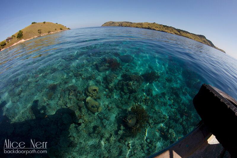 кораллы в море, Флорес, Индонезия