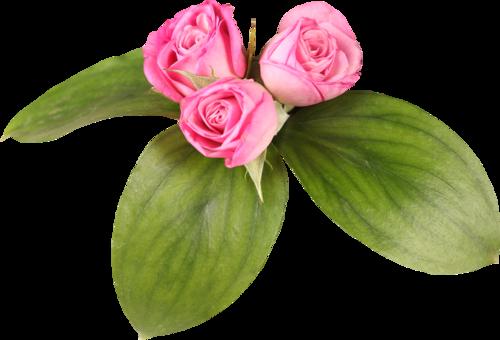 «Day Rose» 0_981fb_6aff2326_L