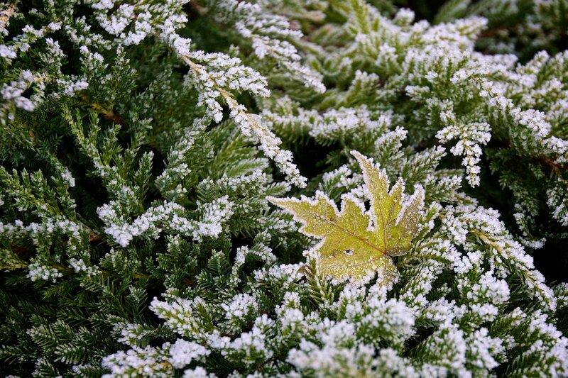 Узор молодой зимы
