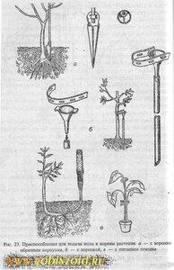 чем ухаживать за растениями