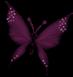 Papillons redimensionnes_1.png