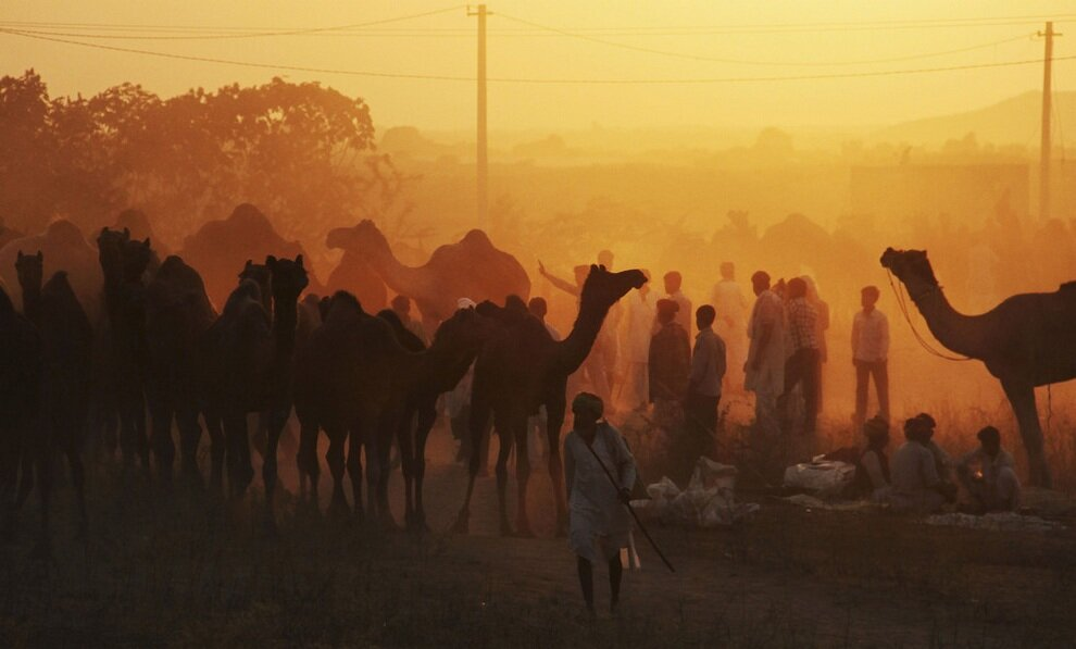 Торговцы размещают свои стада на территории ярмарки.