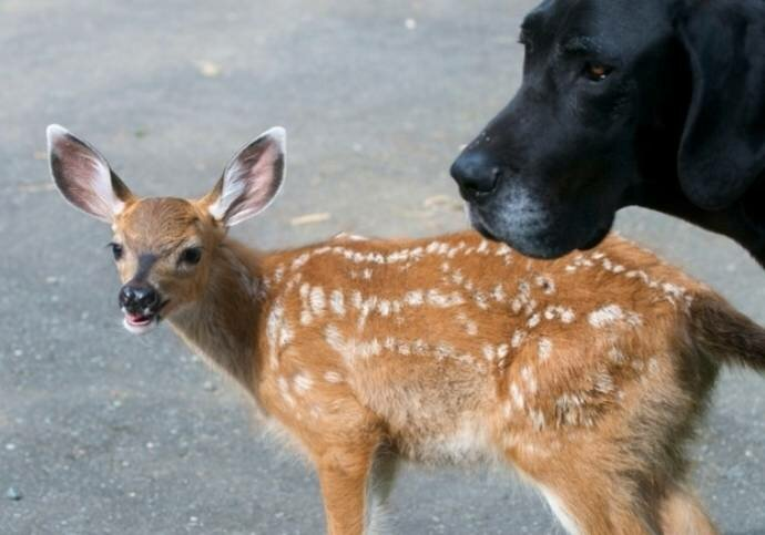 Олень и собака - братья на век!