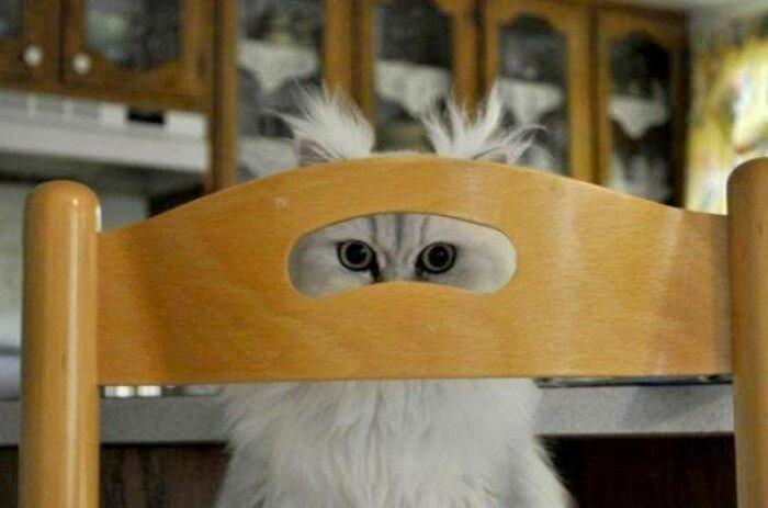Кошка по имени Сова.