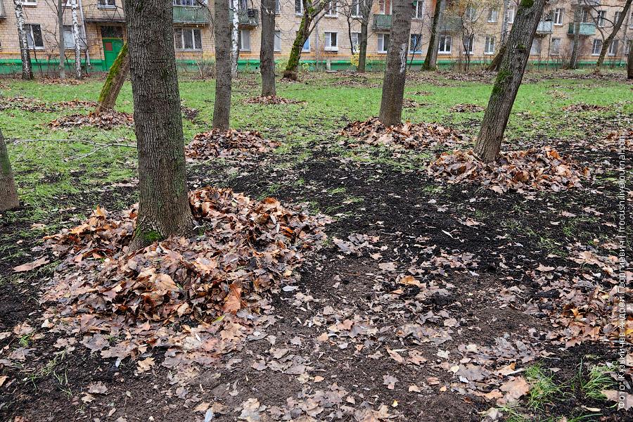 опавшая листва собрана вокруг стволов деревьев