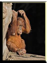 Малайзия. о.Борнео. Фото Clivia - Depositphotos
