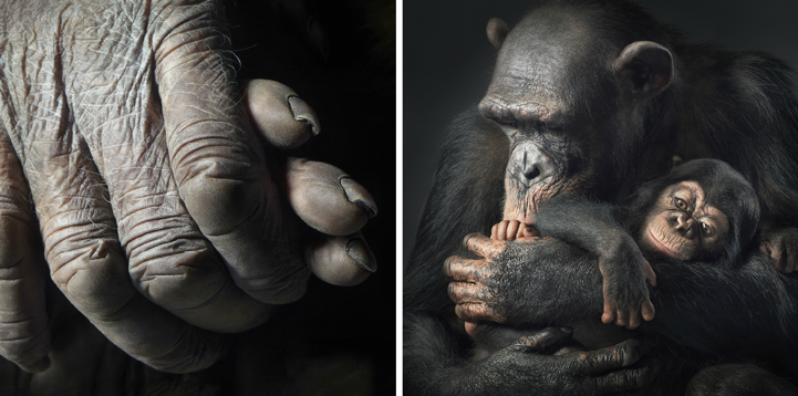 Портреты животных от Tim Flach