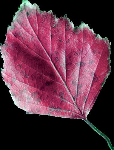 «Autumn Glow» 0_98079_fc0f4df6_L
