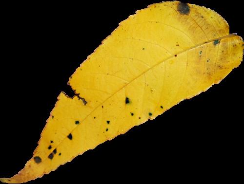 «Autumn Glow» 0_98091_8992fda8_L