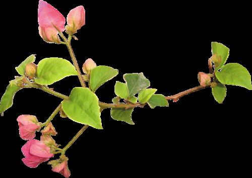 «Day Rose» 0_98218_c736893b_L