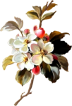 MRD_FrostyFriends_painted flower3.png
