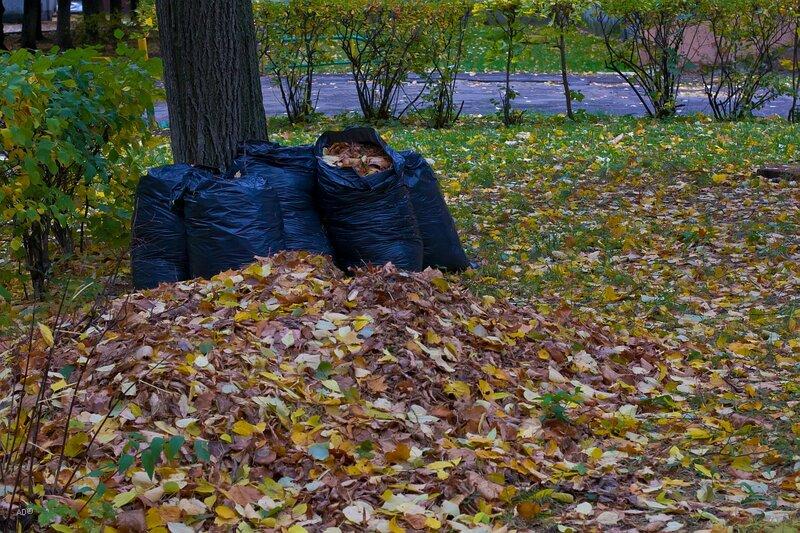Осень в Тимирязево