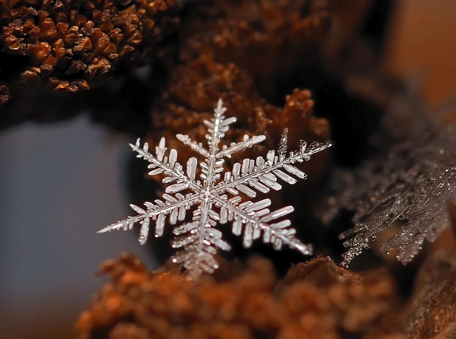 Снежинки. Фотограф Андрей Осокин