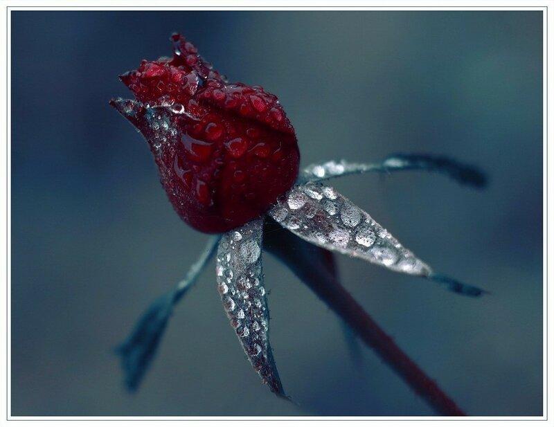 Скорпионов с днем варенья :-)