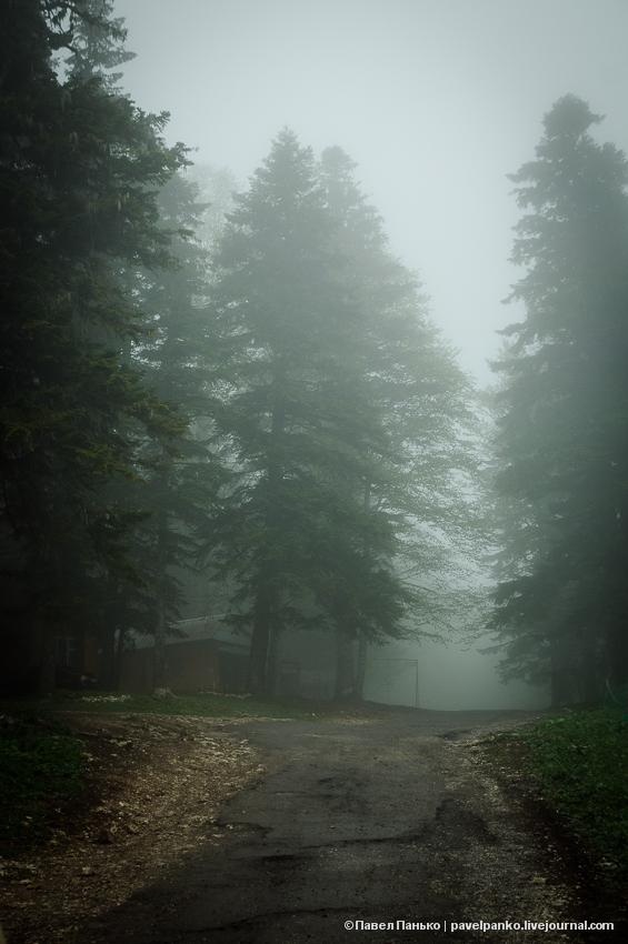 панько pavelpanko Адыгея туман дорога лес