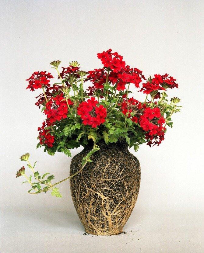 Земляные вазы