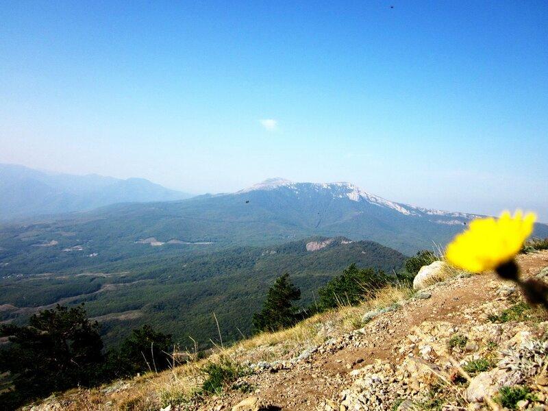 Долина и желтый цветок