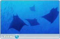 Азорские острова. Часть 1: Акулы, киты, манты / Azores: Sharks, Whales, Manta Rays (2011) BDRip