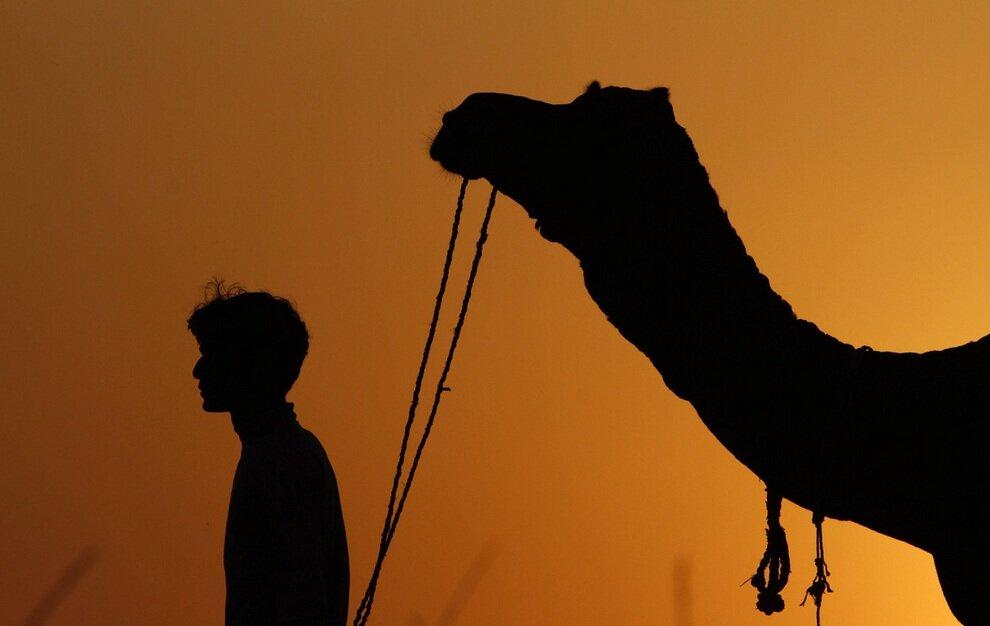 Силуэт парня и его верблюда на закате.