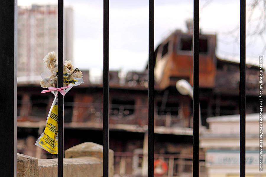 цветы в память о погибшем теплоходе Сергей Абрамов
