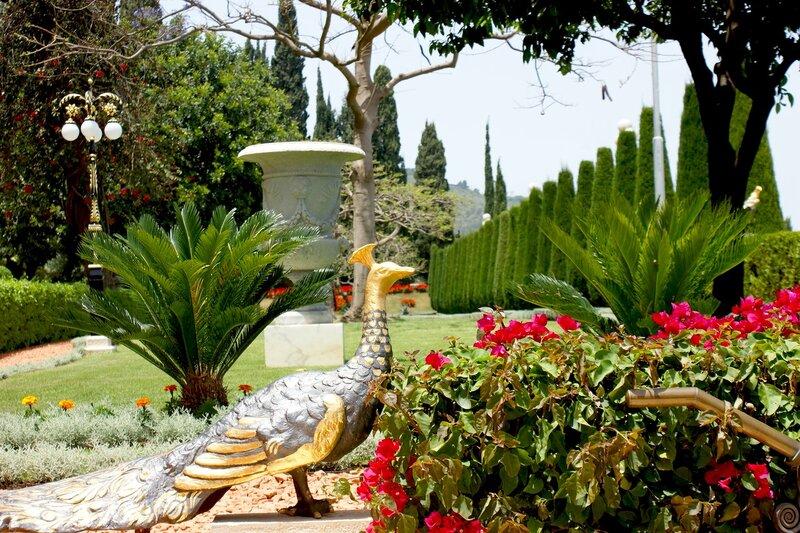 израиль картинки цветов считается одним самых