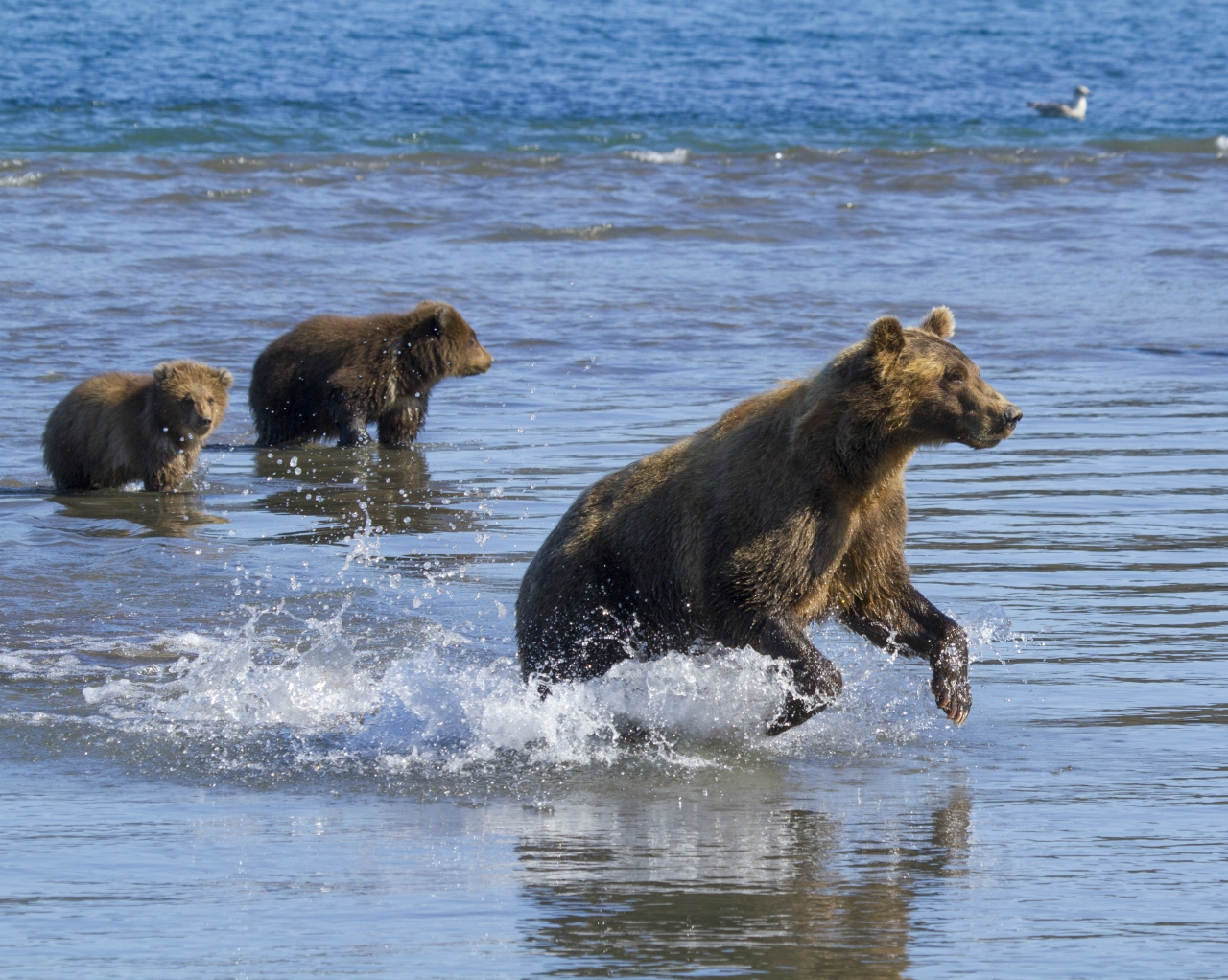 mother bear and two cubs