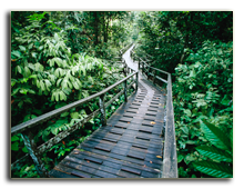 Малайзия. о.Борнео. Footbridge in a rain forest, Sepilok, Borneo, Malaysia. Фото - BMJ - shutterstock