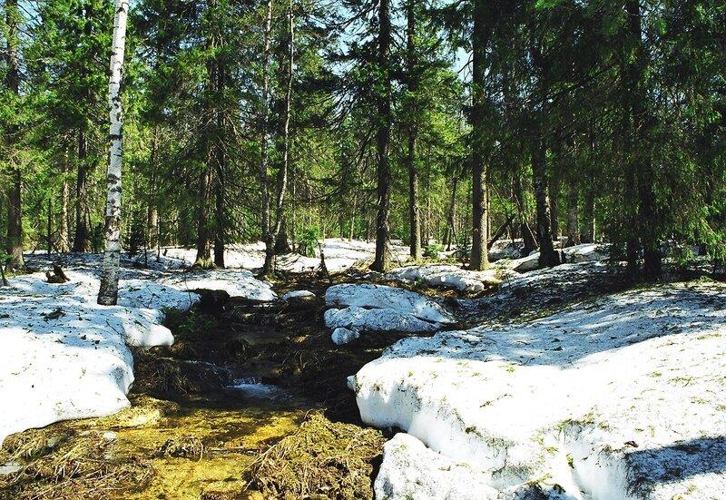 Фото связанные в лесу 9 фотография