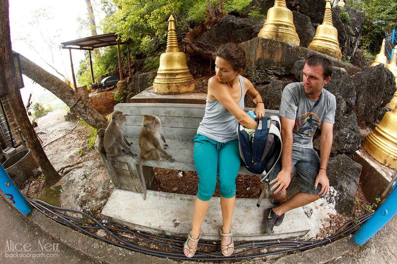 обезбяны в ожидании лакомства в храме тигра краби таиланд