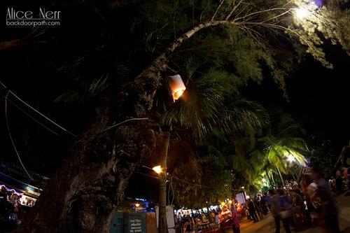 фонарик, запутавшийся в пальмовых листах, лой кратонг, краби