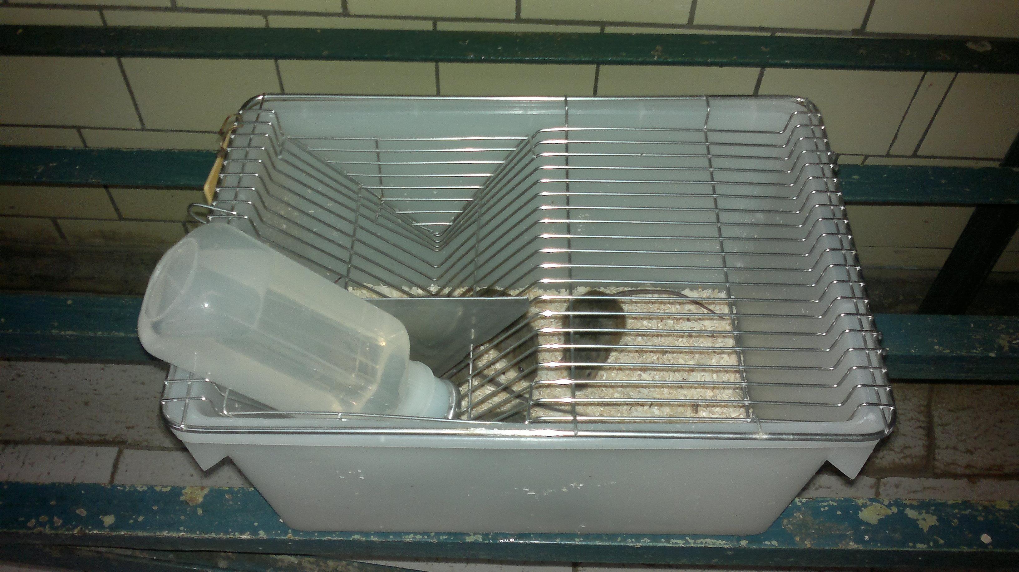 Клетки для лабораторных мышей своими руками 89