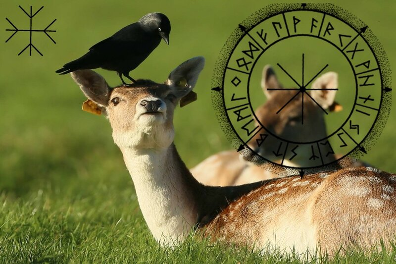 Իմացեք որ կենդանին է համապատասխանում Ձեզ ըստ կելտական հորոսկոպի