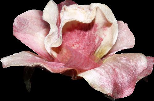 «Day Rose» 0_981c0_7e8d4b7b_L
