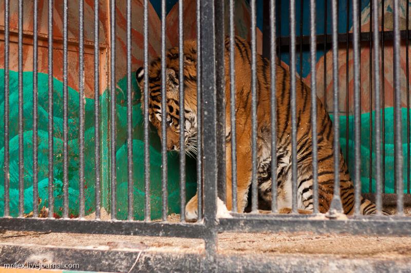 Передвижной зоопарк