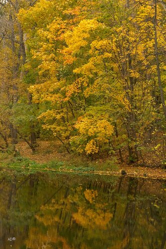 Autumn on the Vorobyovy Gory