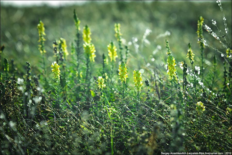 Зеленое волшебство крымской осени
