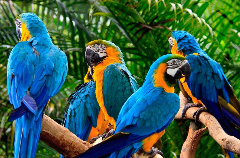 В случае с попугаями это - огромное количество настоящей тропической