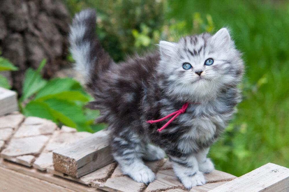 Фото 10 самых красивых котов