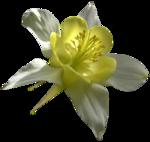 цветы (35).png