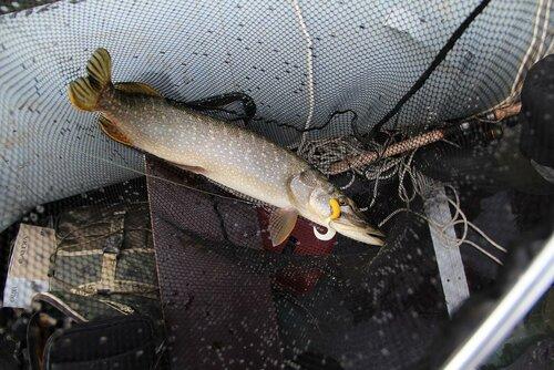 рыбалка на суре в чувашии видео