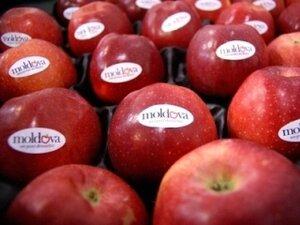 Молдавские фрукты получат новый бренд «Moldova»