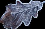 Carena_Winter is Coming_18.png